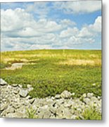 Blueberry Field With Blue Sky And Clouds In Maine Metal Print