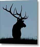 Bull Elk At First Light Metal Print