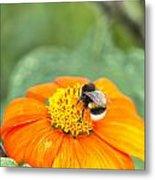Bumble Bee 01 Metal Print