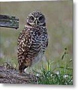 Burrowing Owls - Watching You 3 Metal Print