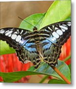 Butterfly Beauty And Grace Metal Print