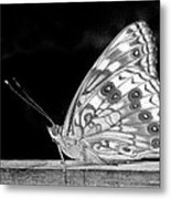 Butterfly In Black And White Metal Print
