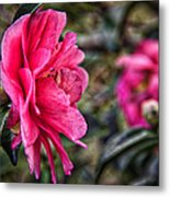 Camellia De Mamie Metal Print