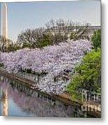 Cherry Reflection  Metal Print