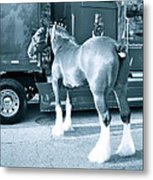 Clydesdale In Black And White Metal Print
