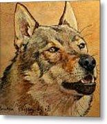 Czechoslovakian Wolfdog Portrait Metal Print