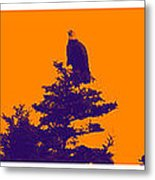 Eagle Scout At Sunset Metal Print