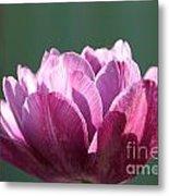 Exotic Tulip Metal Print
