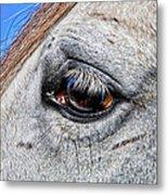 Eye Of A Horse Metal Print