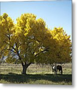 Fall In Bishop California Metal Print