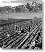 Farm Workers And Mount Williamson Metal Print