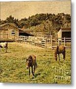 Feral Horses Of Ocracoke Metal Print