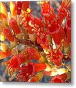 Fiery Orange Flower Metal Print