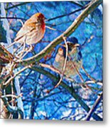 Finch And Blue Jay - California Winter Day Metal Print