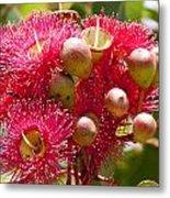 Flowering Gum W Ants Metal Print