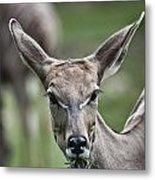 I Am All Ears Metal Print