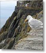 Come Fly With Me Metal Print