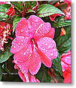 Impatiens Metal Print by Debbie Sikes
