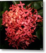 Ixora Night  Metal Print