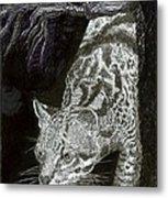 Jaguar Or Jacaranda  Metal Print