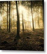 Kings Wood In Autumn Metal Print