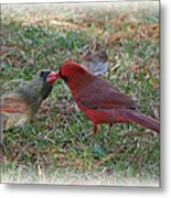 Kissing Cardinals Metal Print