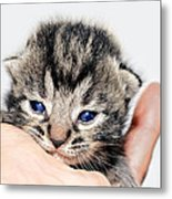 Kitten In A Hand Metal Print