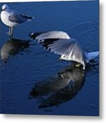 Landing On Icy Water Metal Print