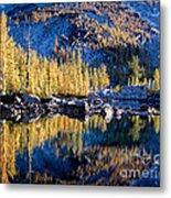Larch Tree Reflection In Leprechaun Lake Metal Print