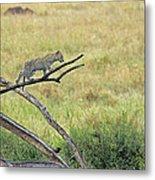 Leopard Cub In Serengeti Metal Print