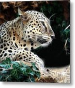 Leopard Watching It's Prey Metal Print
