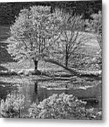 Long Pond On Mount Desert Island In Maine Metal Print