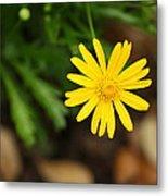 Marguerite Yellow Daisy Metal Print