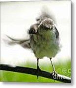 Mockingbird Dance Metal Print
