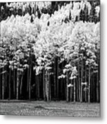 New Mexico Aspens Metal Print