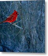 Northern Cardinal Metal Print by Thomas Young