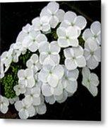 Oak Leaf Hydrangea Metal Print