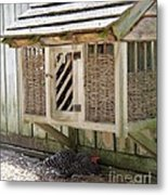 Old Fashioned Chicken Coop In Colonial Williamsburg Virginia Metal Print