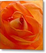 Orange Swirls Rose Flower Metal Print