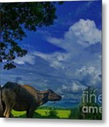 Philippine Countryside Metal Print
