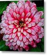 Pink Flower Metal Print