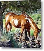 Pinto In The Pines Metal Print