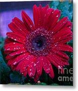 Red Gerbera Daisy Metal Print
