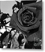 Rose In Black And White Metal Print