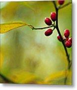 Spicebush With Red Berries Metal Print