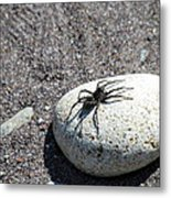 Spider In The Sun Metal Print