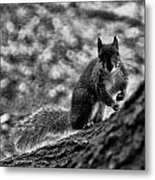 Squirrel In The Park V3 Metal Print
