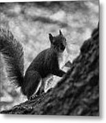 Squirrel In The Park V4 Metal Print