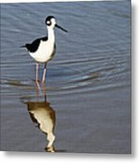 Stilt Looking At Me Metal Print