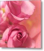 Tenderness Pink Roses 1 Metal Print